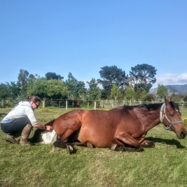 Foaling season has finished at Pear Tree Farm